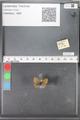 http://mczbase.mcz.harvard.edu/specimen_images/ent-lepidoptera/images/2010_04_13/IMG_040280.JPG
