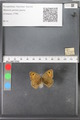 http://mczbase.mcz.harvard.edu/specimen_images/ent-lepidoptera/images/2010_04_13/IMG_040456.JPG