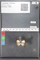 http://mczbase.mcz.harvard.edu/specimen_images/ent-lepidoptera/images/2010_04_16/IMG_040818.JPG