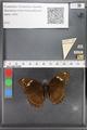 http://mczbase.mcz.harvard.edu/specimen_images/ent-lepidoptera/images/2010_04_20/IMG_041571.JPG