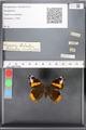 http://mczbase.mcz.harvard.edu/specimen_images/ent-lepidoptera/images/2010_05_10/IMG_044787.JPG