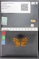 http://mczbase.mcz.harvard.edu/specimen_images/ent-lepidoptera/images/2010_05_10/IMG_044960.JPG