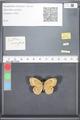http://mczbase.mcz.harvard.edu/specimen_images/ent-lepidoptera/images/2010_05_17/IMG_046012.JPG