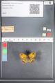 http://mczbase.mcz.harvard.edu/specimen_images/ent-lepidoptera/images/2010_07_02/IMG_049489.JPG