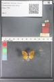 http://mczbase.mcz.harvard.edu/specimen_images/ent-lepidoptera/images/2010_07_07/IMG_049815.JPG
