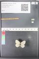 http://mczbase.mcz.harvard.edu/specimen_images/ent-lepidoptera/images/2010_07_12/IMG_050110.JPG