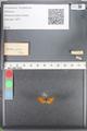 http://mczbase.mcz.harvard.edu/specimen_images/ent-lepidoptera/images/2010_08_12/IMG_051979.JPG