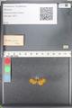 http://mczbase.mcz.harvard.edu/specimen_images/ent-lepidoptera/images/2010_08_12/IMG_051981.JPG