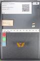 http://mczbase.mcz.harvard.edu/specimen_images/ent-lepidoptera/images/2010_08_12/IMG_051984.JPG
