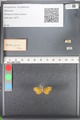 http://mczbase.mcz.harvard.edu/specimen_images/ent-lepidoptera/images/2010_08_12/IMG_051985.JPG