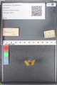 http://mczbase.mcz.harvard.edu/specimen_images/ent-lepidoptera/images/2010_08_12/IMG_051986.JPG