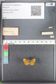 http://mczbase.mcz.harvard.edu/specimen_images/ent-lepidoptera/images/2010_08_12/IMG_051989.JPG