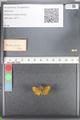 http://mczbase.mcz.harvard.edu/specimen_images/ent-lepidoptera/images/2010_08_12/IMG_051990.JPG
