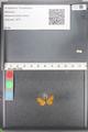 http://mczbase.mcz.harvard.edu/specimen_images/ent-lepidoptera/images/2010_08_12/IMG_052001.JPG