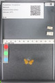 http://mczbase.mcz.harvard.edu/specimen_images/ent-lepidoptera/images/2010_08_12/IMG_052003.JPG
