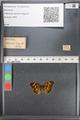 http://mczbase.mcz.harvard.edu/specimen_images/ent-lepidoptera/images/2010_08_13/IMG_052235.JPG