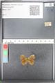 http://mczbase.mcz.harvard.edu/specimen_images/ent-lepidoptera/images/2010_10_01/IMG_054949.JPG