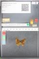 http://mczbase.mcz.harvard.edu/specimen_images/ent-lepidoptera/images/2010_10_04/IMG_055000.JPG