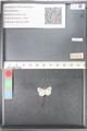 http://mczbase.mcz.harvard.edu/specimen_images/ent-lepidoptera/images/2010_10_06/IMG_055409.JPG