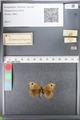 http://mczbase.mcz.harvard.edu/specimen_images/ent-lepidoptera/images/2010_10_07/IMG_055604.JPG