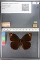 http://mczbase.mcz.harvard.edu/specimen_images/ent-lepidoptera/images/2010_10_12/IMG_055661.JPG