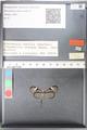 http://mczbase.mcz.harvard.edu/specimen_images/ent-lepidoptera/images/2010_11_03/IMG_057452.JPG