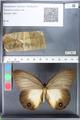 http://mczbase.mcz.harvard.edu/specimen_images/ent-lepidoptera/images/2010_11_09/IMG_058055.JPG