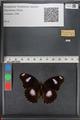 http://mczbase.mcz.harvard.edu/specimen_images/ent-lepidoptera/images/2010_12_01/IMG_061176.JPG