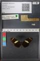http://mczbase.mcz.harvard.edu/specimen_images/ent-lepidoptera/images/2010_12_06/IMG_062460.JPG