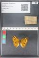 http://mczbase.mcz.harvard.edu/specimen_images/ent-lepidoptera/images/2010_12_08/IMG_063171.JPG
