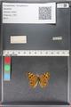 http://mczbase.mcz.harvard.edu/specimen_images/ent-lepidoptera/images/2010_12_09/IMG_063415.JPG