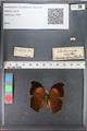 http://mczbase.mcz.harvard.edu/specimen_images/ent-lepidoptera/images/2010_12_10/IMG_063745.JPG