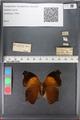 http://mczbase.mcz.harvard.edu/specimen_images/ent-lepidoptera/images/2010_12_10/IMG_063746.JPG
