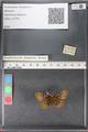 http://mczbase.mcz.harvard.edu/specimen_images/ent-lepidoptera/images/2010_12_10/IMG_064016.JPG