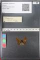 http://mczbase.mcz.harvard.edu/specimen_images/ent-lepidoptera/images/2010_12_13/IMG_064377.JPG