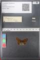 http://mczbase.mcz.harvard.edu/specimen_images/ent-lepidoptera/images/2010_12_13/IMG_064378.JPG