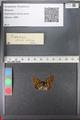 http://mczbase.mcz.harvard.edu/specimen_images/ent-lepidoptera/images/2010_12_13/IMG_064379.JPG