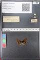 http://mczbase.mcz.harvard.edu/specimen_images/ent-lepidoptera/images/2010_12_13/IMG_064406.JPG
