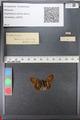 http://mczbase.mcz.harvard.edu/specimen_images/ent-lepidoptera/images/2010_12_13/IMG_064407.JPG