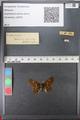 http://mczbase.mcz.harvard.edu/specimen_images/ent-lepidoptera/images/2010_12_13/IMG_064408.JPG