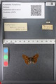 http://mczbase.mcz.harvard.edu/specimen_images/ent-lepidoptera/images/2010_12_13/IMG_064414.JPG