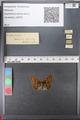 http://mczbase.mcz.harvard.edu/specimen_images/ent-lepidoptera/images/2010_12_13/IMG_064415.JPG