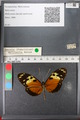 http://mczbase.mcz.harvard.edu/specimen_images/ent-lepidoptera/images/2011_01_04/IMG_065355.JPG