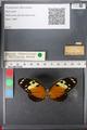 http://mczbase.mcz.harvard.edu/specimen_images/ent-lepidoptera/images/2011_01_04/IMG_065356.JPG