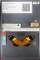 http://mczbase.mcz.harvard.edu/specimen_images/ent-lepidoptera/images/2011_01_04/IMG_065358.JPG