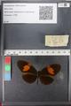 http://mczbase.mcz.harvard.edu/specimen_images/ent-lepidoptera/images/2011_01_05/IMG_065553.JPG