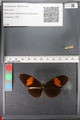 http://mczbase.mcz.harvard.edu/specimen_images/ent-lepidoptera/images/2011_01_06/IMG_065560.JPG