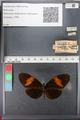 http://mczbase.mcz.harvard.edu/specimen_images/ent-lepidoptera/images/2011_01_06/IMG_065563.JPG