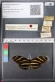 http://mczbase.mcz.harvard.edu/specimen_images/ent-lepidoptera/images/2011_01_10/IMG_065830.JPG