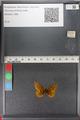 http://mczbase.mcz.harvard.edu/specimen_images/ent-lepidoptera/images/2011_01_24/IMG_066702.JPG